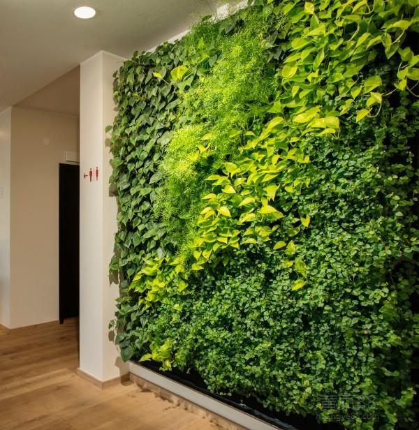室内高层植物墙的打造有什么技术要点?