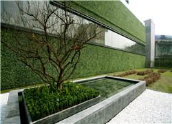 西安植物墙的存活率要如何提升