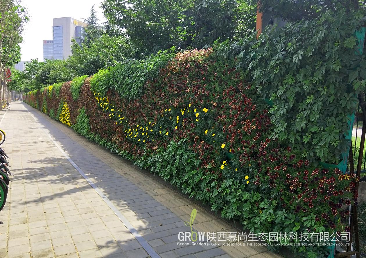 室外生態植物墻
