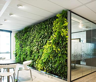 室内植物墙的设计和好处?