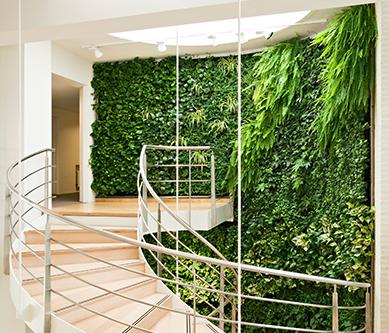 垂直绿化植物墙
