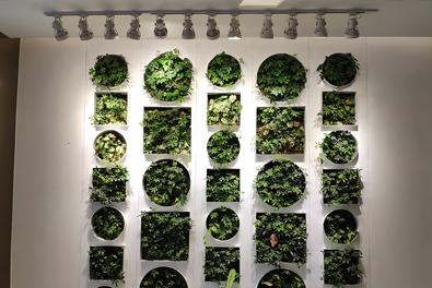 西安建筑科技大学华清广场室内植物墙