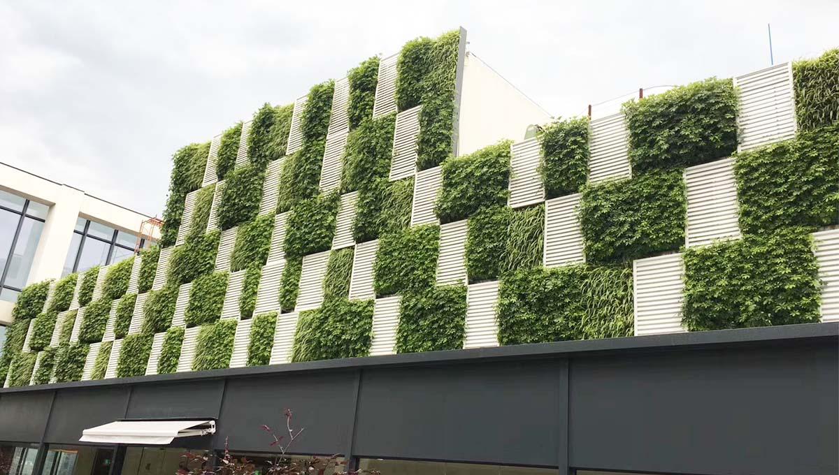 植物墙养护要做到哪几点,你了解吗