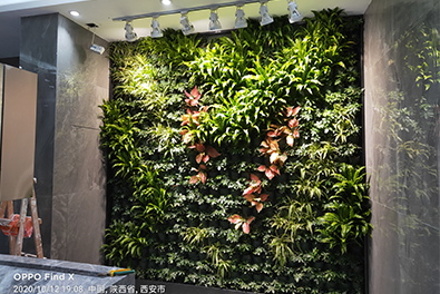 植物墙丰富了墙面的效果!