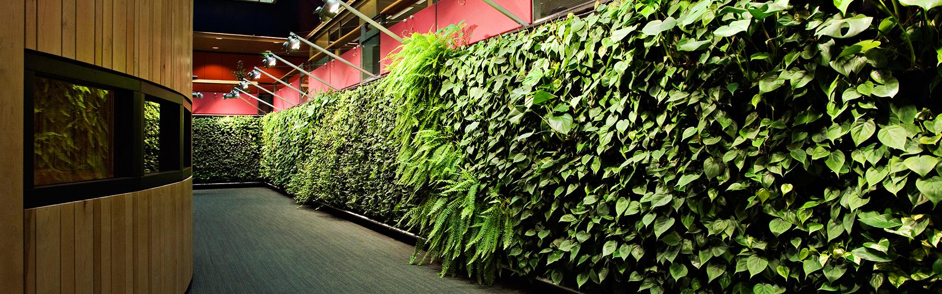 植物墙帮助减少能源的消耗