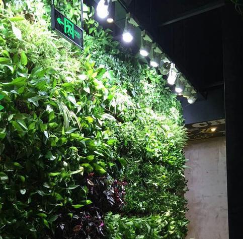 垂直绿化施工步骤及其养护方法