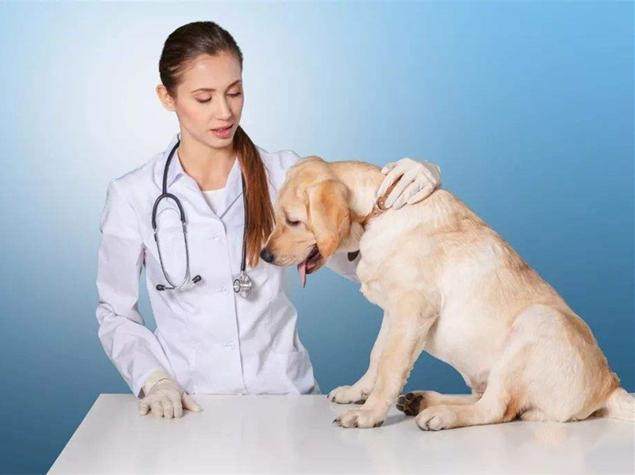 GXQ-宠物干眼症治疗