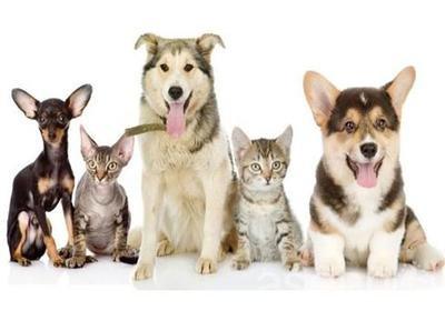 绵阳宠物诊所
