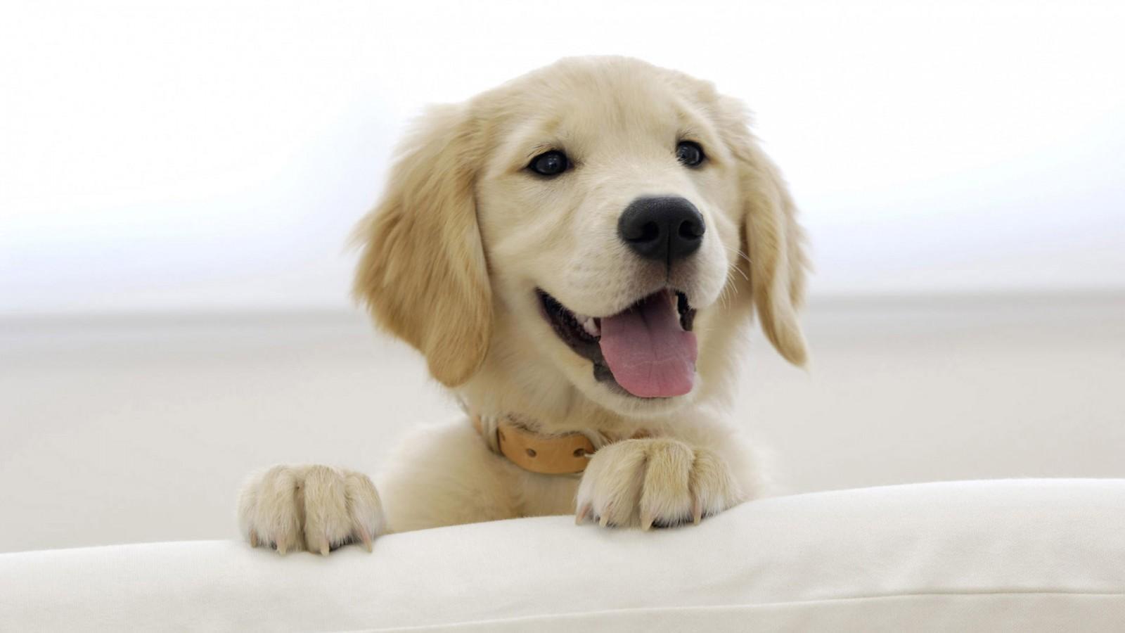 如何做好绵阳宠物狗狗的日常环境卫生?