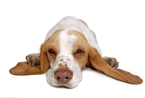 绵阳狗狗出现严重便秘时要怎么办?