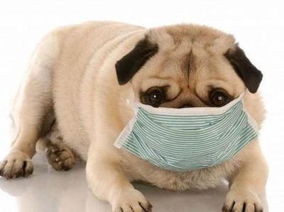 PMJD-宠物治疗-JMY