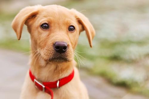 怎样正确打理绵阳宠物狗狗的毛发?