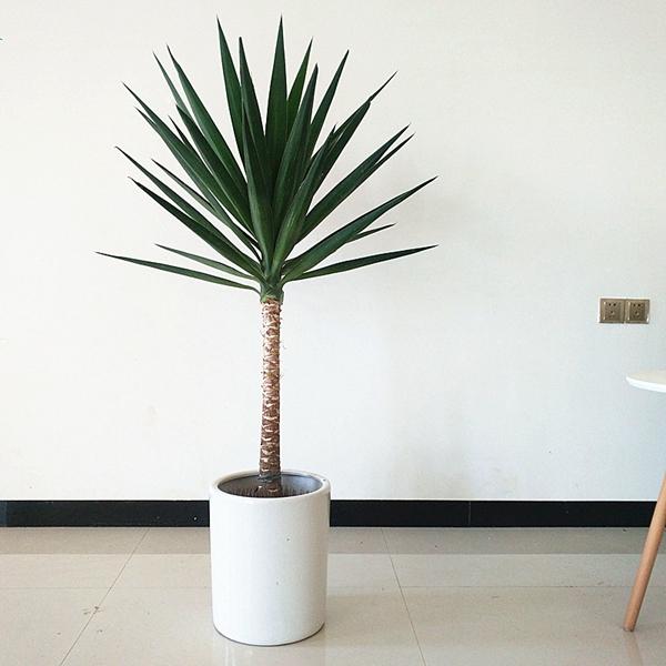 在什么情况下选择租赁植物更划算?