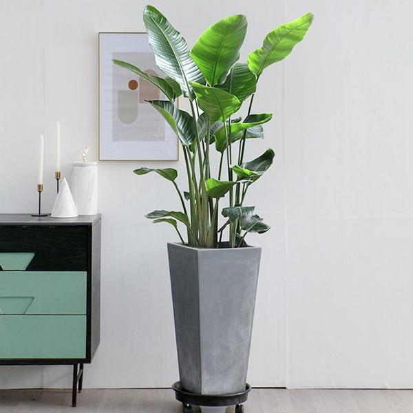 各种场所花卉植物租赁方案建议!
