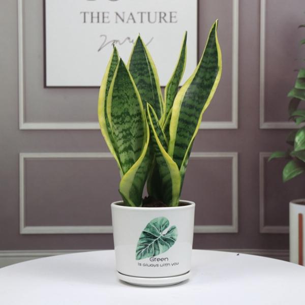 植物租赁公司在室内绿化布置过程中强调的是植物与室内其他陈设物之间的和谐