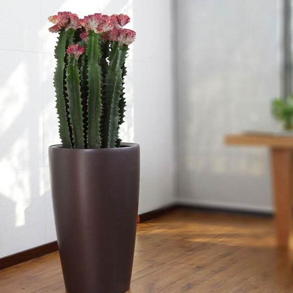 植物租摆-龙骨