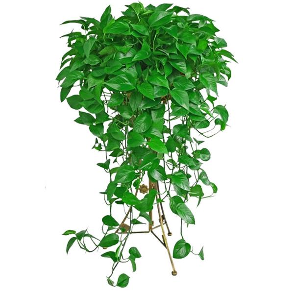在选择绿植租赁的植物时应当注意什么