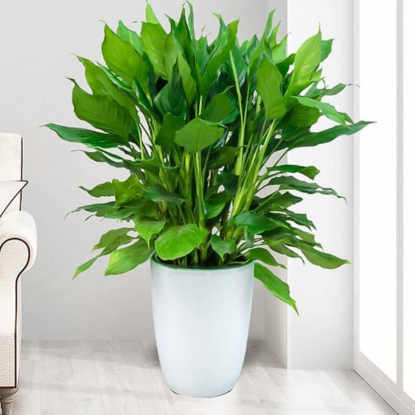 植物租赁:空气对花卉的影响!