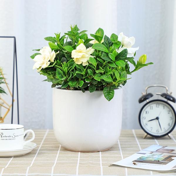 企业办公室为什么要植物租赁