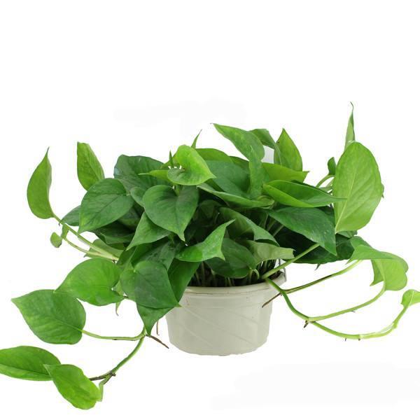 植物租赁该如何选择合适植物?