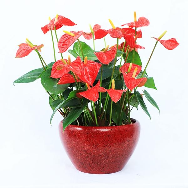 花卉租赁方便人们使用