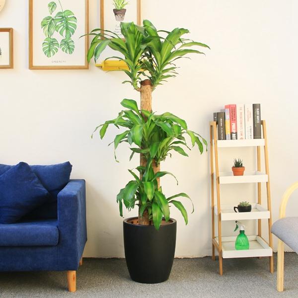 植物租赁浅谈植物租摆经营门道