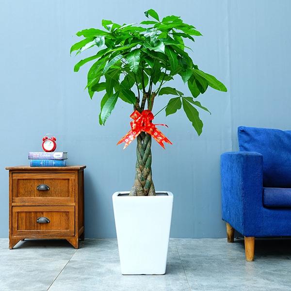 室内花卉租赁方案