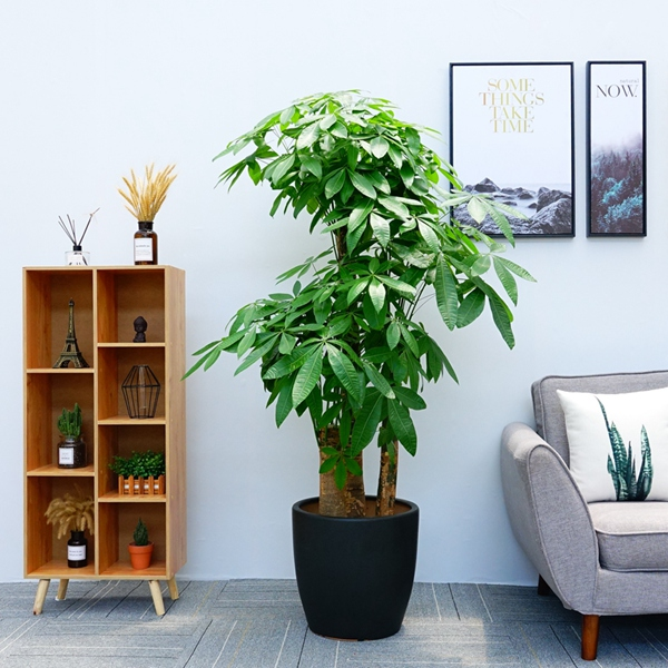 办公室花卉租摆市场非常成熟