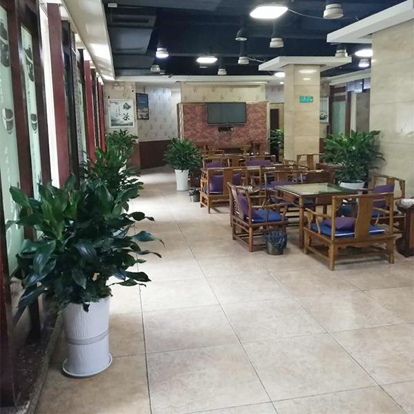 绵阳涪城区某茶楼植物租摆案例