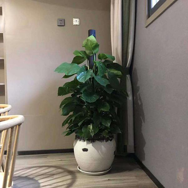 绿植租赁之办公室风水开运