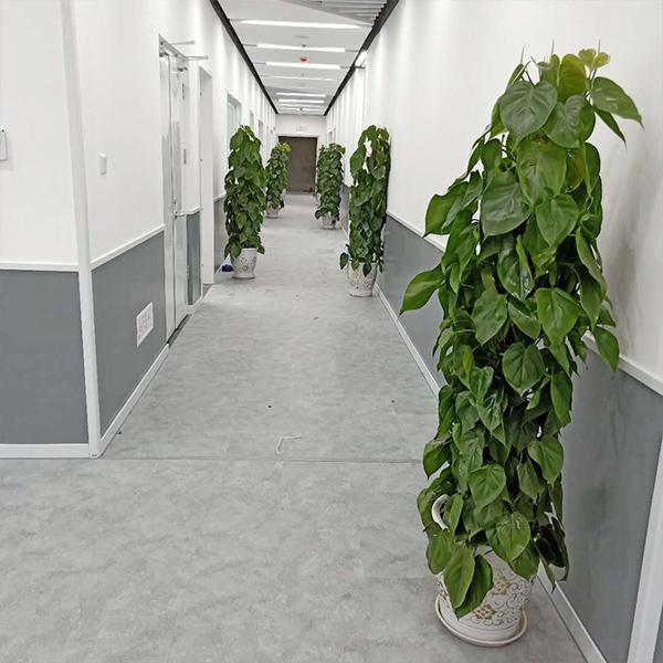 绵阳学而思花卉与董氏农业合作达成花卉租赁项目