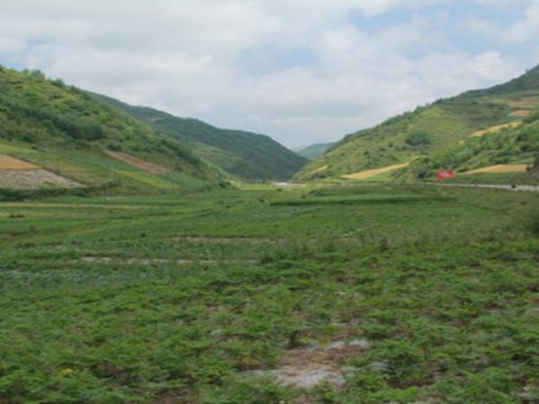 羌活种植基地