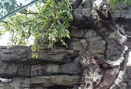 仿真榕树枝