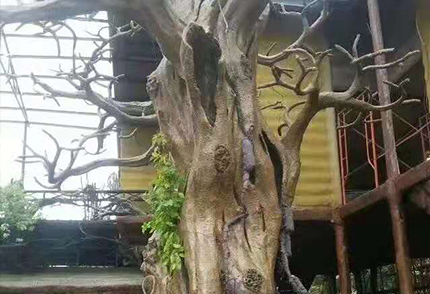 大型热带树