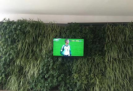室内景观植物墙