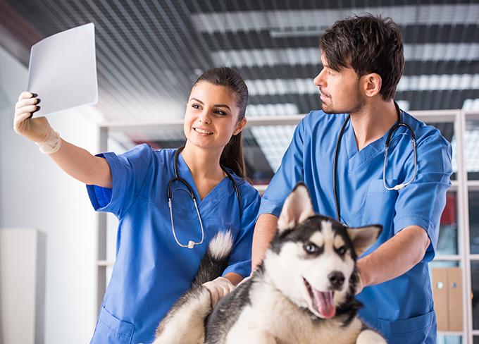 宠物医生培训学校