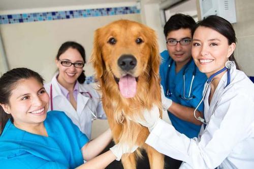 宠物医生培训