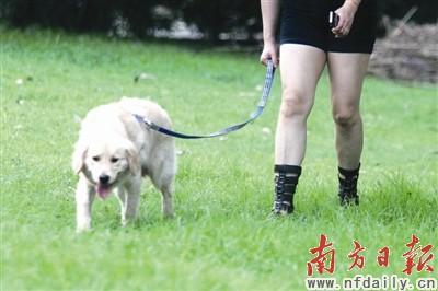 �赡凶泳�射箭把在公�@遛狗的老人射中_天津市汽�人造皮革