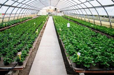 青海溫室大棚種植時需要注意調整濕度