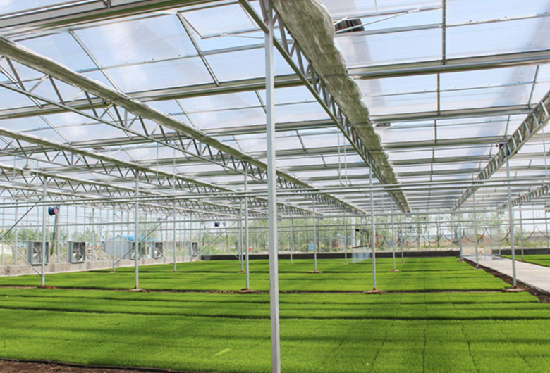 新型蔬菜温室大棚