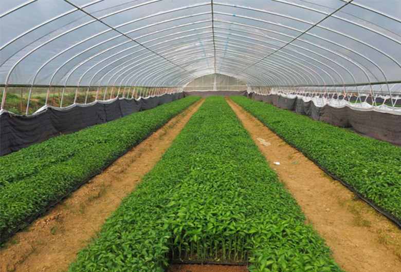 蔬菜温室大棚的测土配方施肥的好处