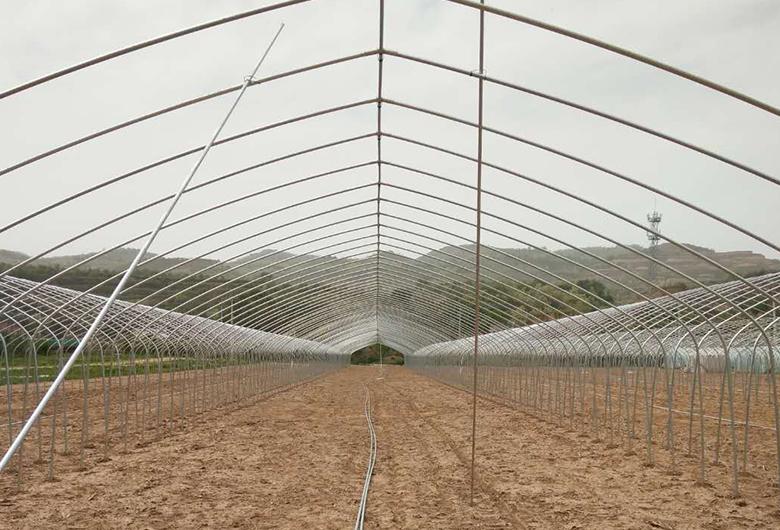 青海孔雀养殖基地案例
