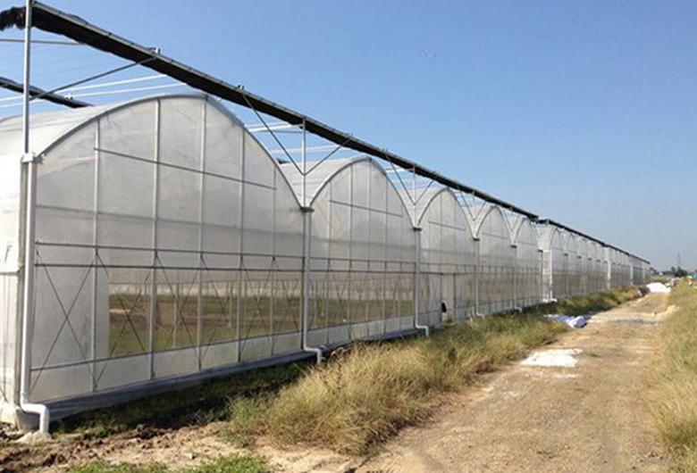 农用塑料大棚