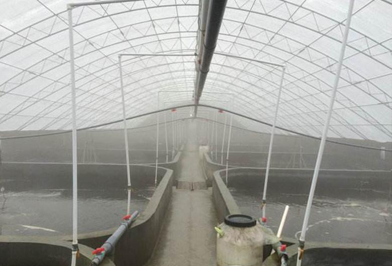 水产养殖温室大棚