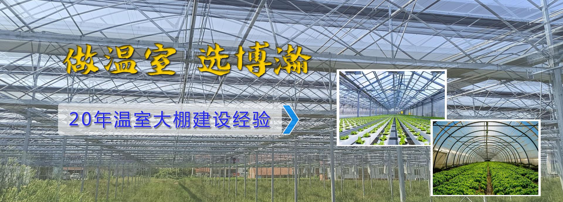 青海温室大棚厂家