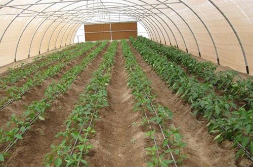 温室大棚在农业上得到广泛应用