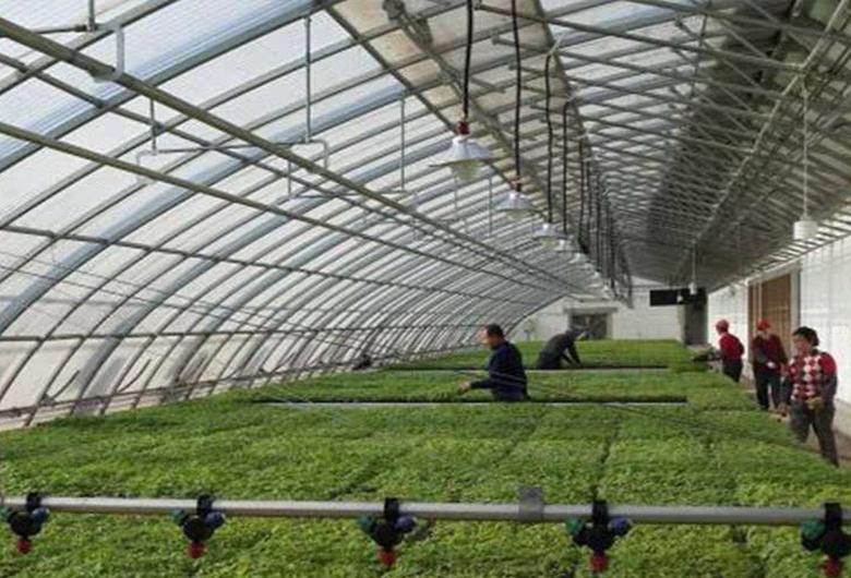 新型日光温室大棚建设