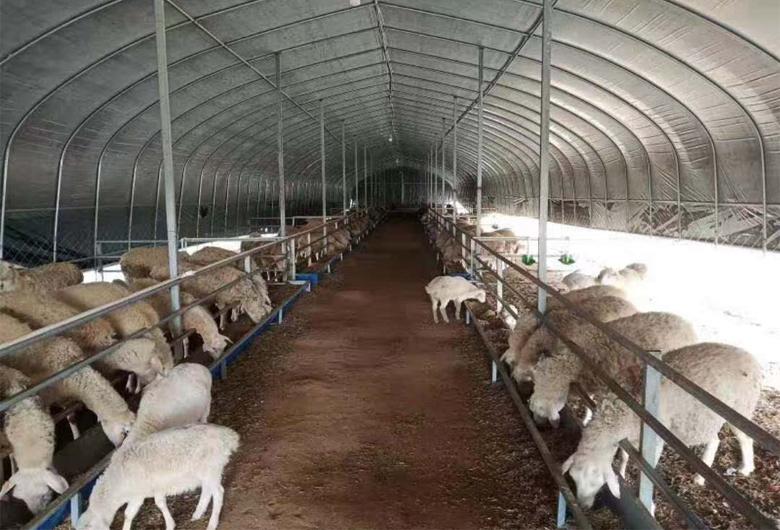 羊舍养殖大棚