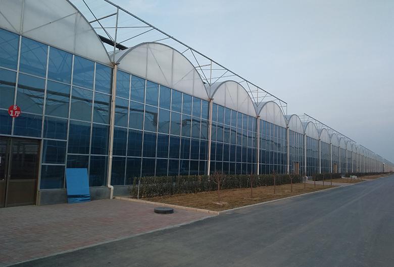 青海连栋温室大棚