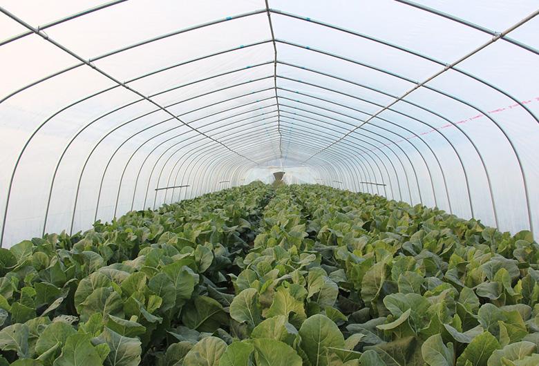 农业温室大棚建设